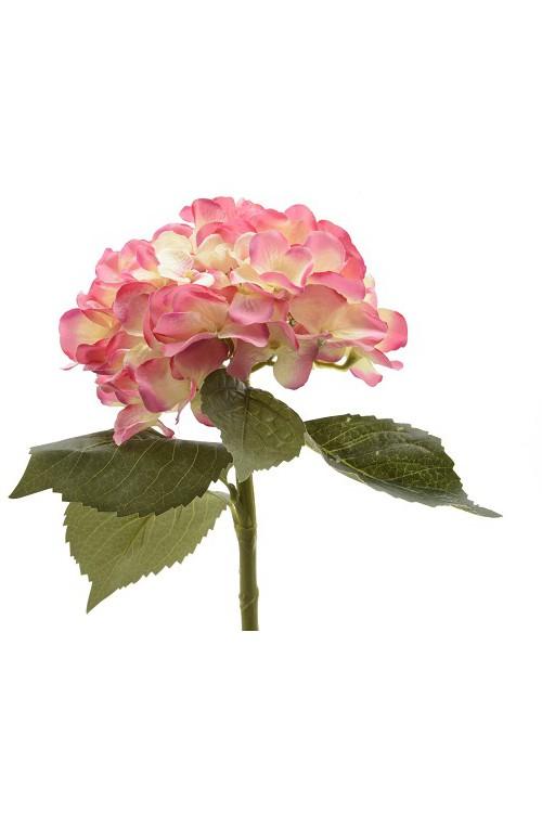 Hortensja Różowa 13705 Wysokość 40 Cm Doniczki Poznanpl